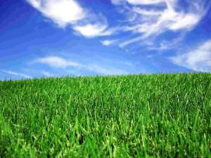 Frisco Lawn Care