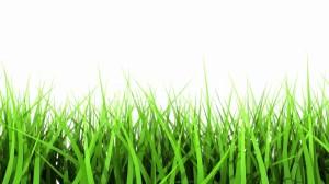 lawn care plano tx