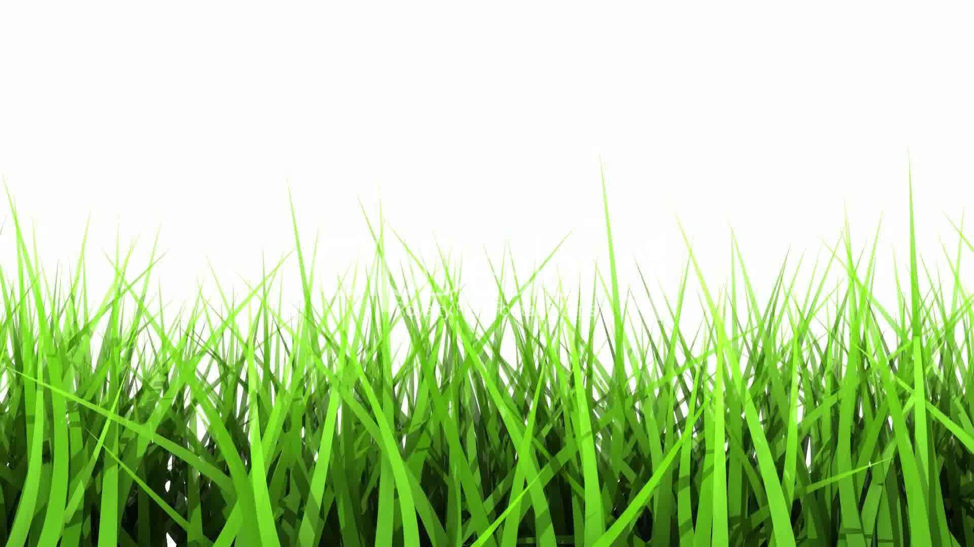 Lawn Care Plano TX • Thompson Landscape