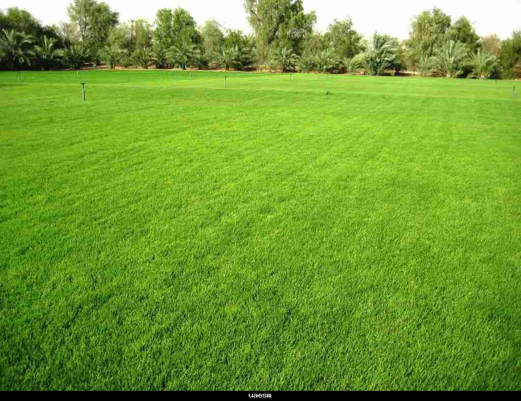Image gallery lawn for Garden care